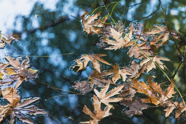 Осенние листья на природе