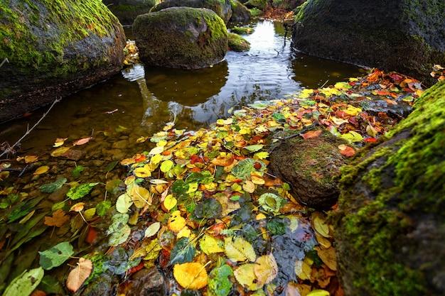 Осенние листья в воде среди больших красивых камней