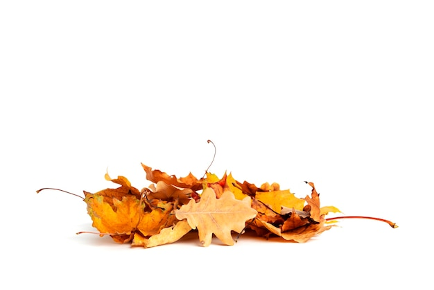 Autumn leaves isolatedon white background. different kind of leaves. high quality photo