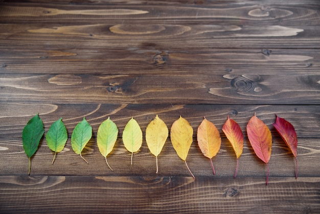 Autumn leaves laid out in a strip passes from green to red on a wooden background