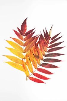 Autumn leaves, light , copyspace.