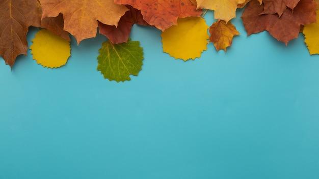 Осенние листья разного цвета, желтые, красные лежат сверху, на синем фоне. копировать пространство.