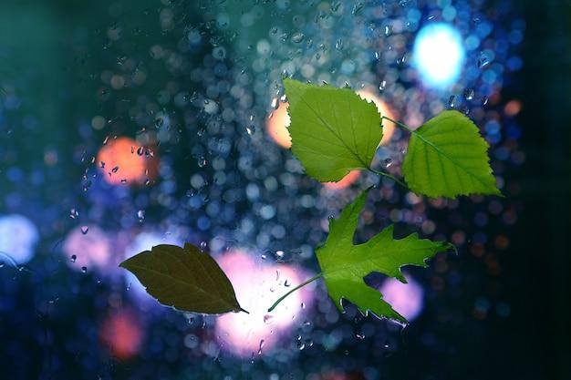 비오는 날씨에 젖은 창에 단풍