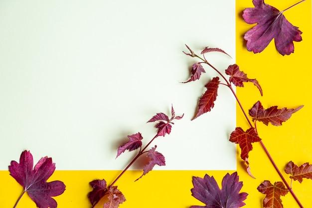 黄色の背景に紅葉。テキストのための場所と秋のコンセプト