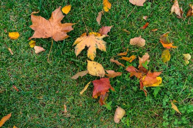 緑の草の紅葉