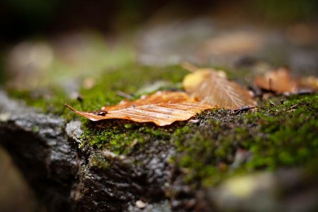 Осенние листья на зеленом мхе