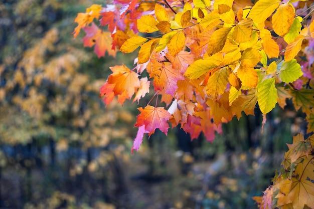 자연에 단풍. 가을 계절 디자인, 단풍 및 숲