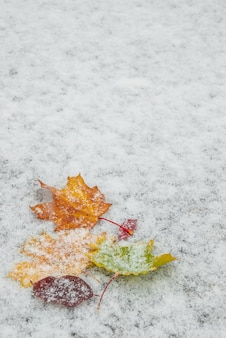 눈, 계절 배경에 단풍