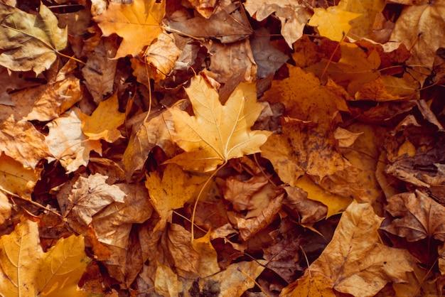 Осенние листья на лесных деревьях.