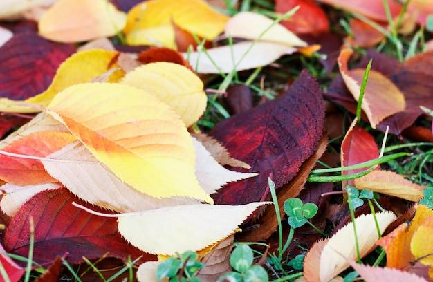 Осенние листья на траве, осенний фон