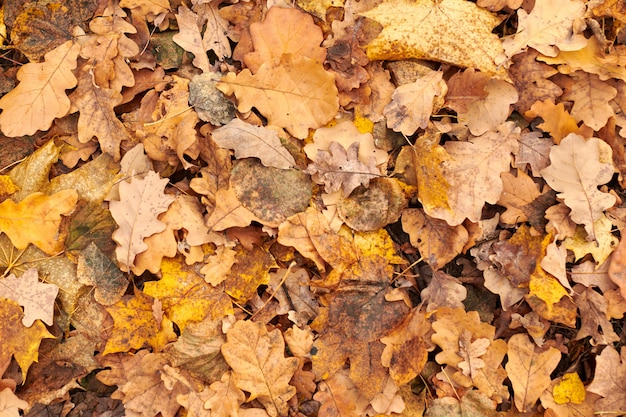 地面に紅葉