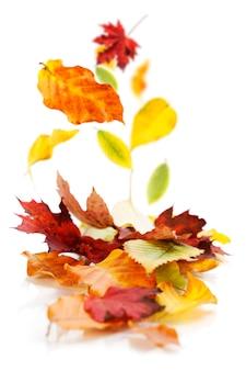 Осенние листья на белом фоне