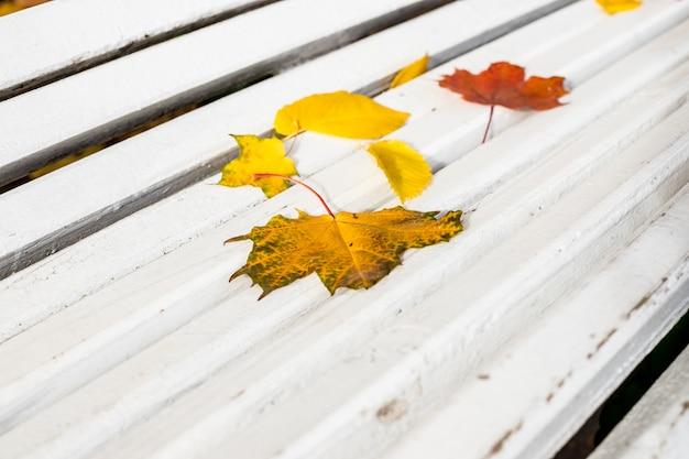 白い木製のベンチの紅葉
