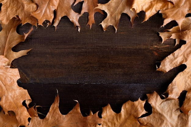 木の表面に紅葉