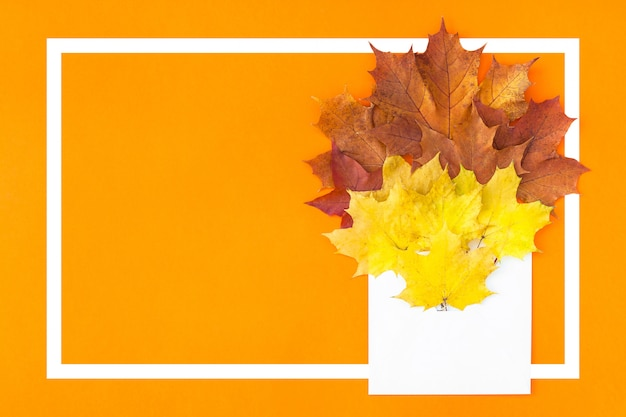 Autumn leaves in paper envelope
