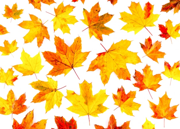 Autumn leaves pattern on white background