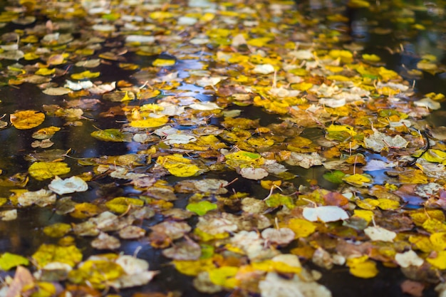 Autumn leaves in puddle