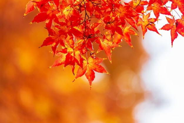 Autumn leaves in seoul, korea