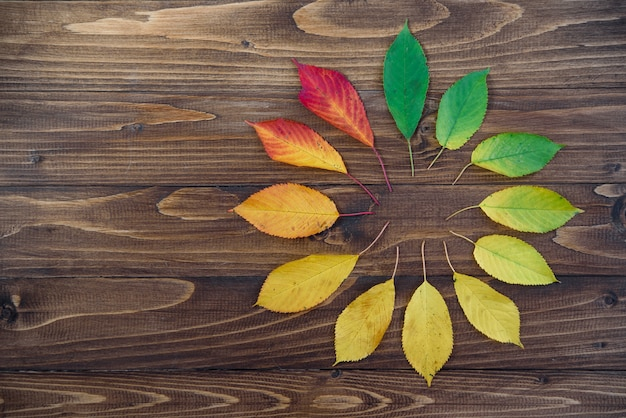 Autumn leaves set in a circle passes from green to red on a wooden background