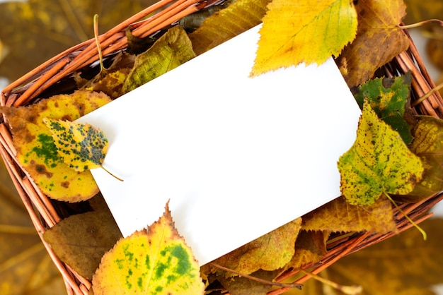 Autumn leaves in straw basket on natural background
