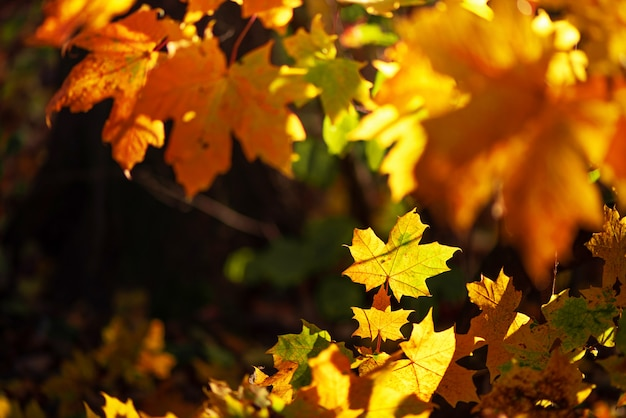 Autumn leaves on sunny background