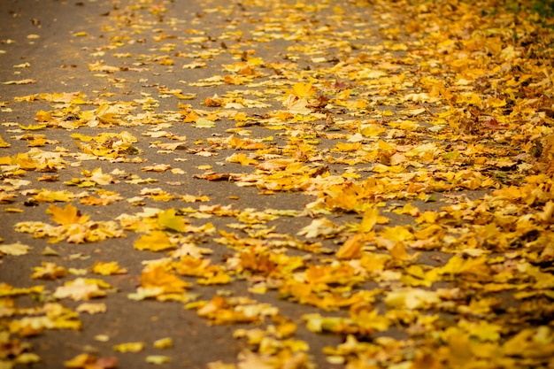 Autumn leaves swept cleaners to the edge of the asphalt road