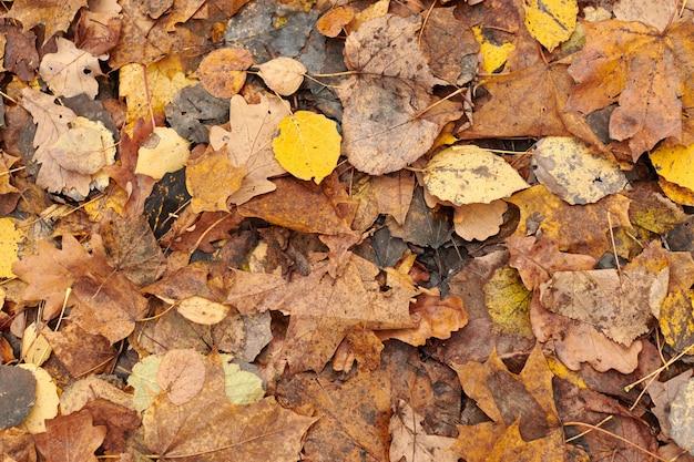 Осенние листья, вид сверху. красочная опавшая листва. дизайн фона для сезонного использования.