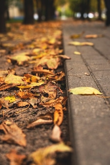 Autumn leaves on a track in a park close-up