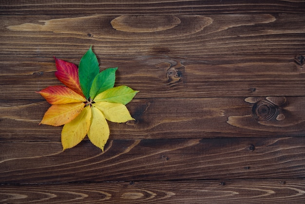 Autumn leaves transition from green to red on wooden background