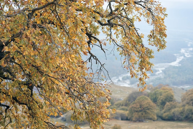 Autumn leaves on trees mountains travel landscape nature