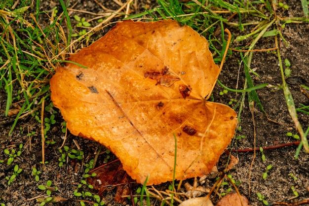 紅葉。紅葉に水滴。緑の芝生のフィールドに紅葉、上からの眺め