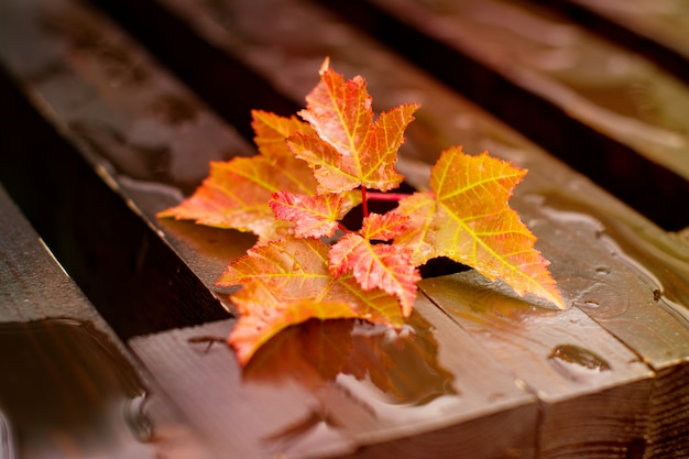 Autumn leaves on wet bench