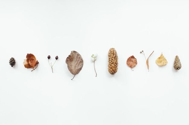 Autumn leaves on white background. autumn, fall concept. flat lay, top view, copy space