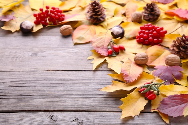 Autumn leaves with berries on a grey background