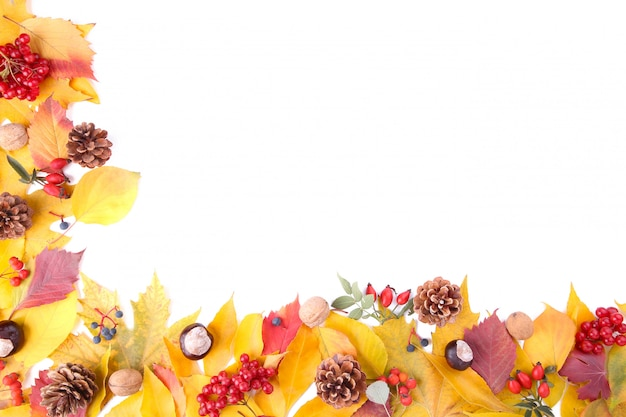 Autumn leaves with berries isolated on white