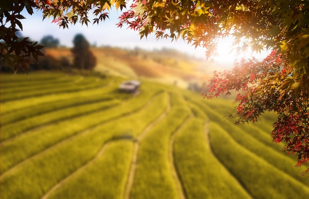 Autumn leaves with blur farm background