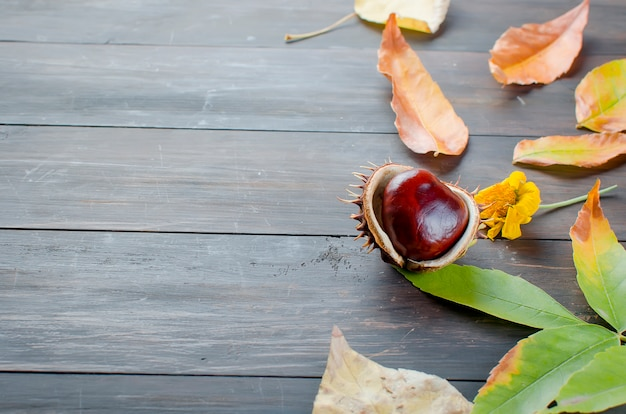 Autumn leaves with chestnut