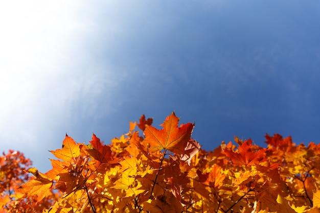 青空の背景と紅葉