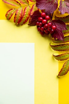 Autumn leaves on a yellow background. autumn concept with place for text