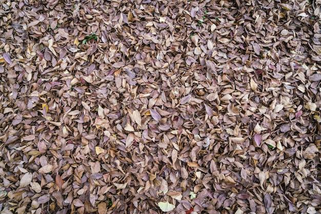 秋には、パックを残す