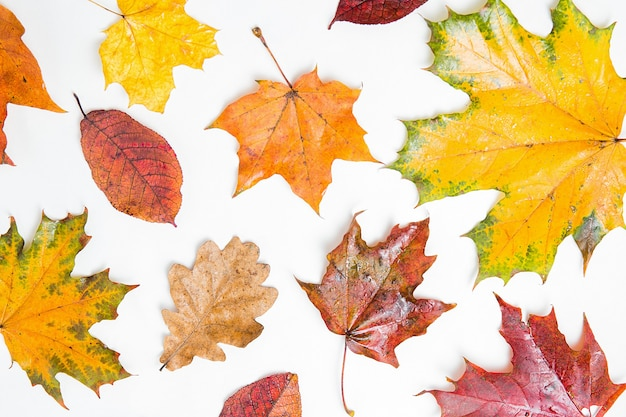 秋のカエデとオークの葉のパターン。多くの異なるカラフルな紅葉の背景。オレンジ、黄色、赤のカエデの葉が背景にあります。鮮やかな色、フラットレイ、コピースペース。