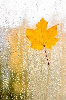 Autumn maple leaf on glass with water drops.