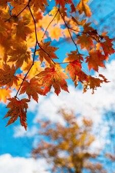 가을 단풍 하늘 가을 시즌에 나뭇잎