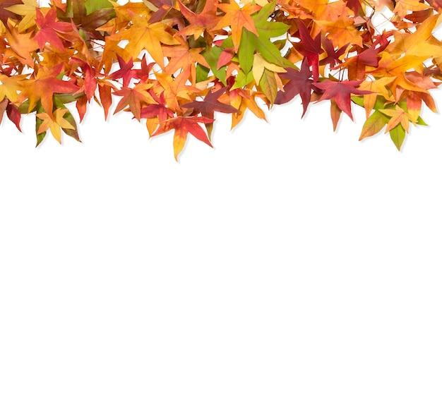 Осенние кленовые листья красный зеленый желтый изолированные