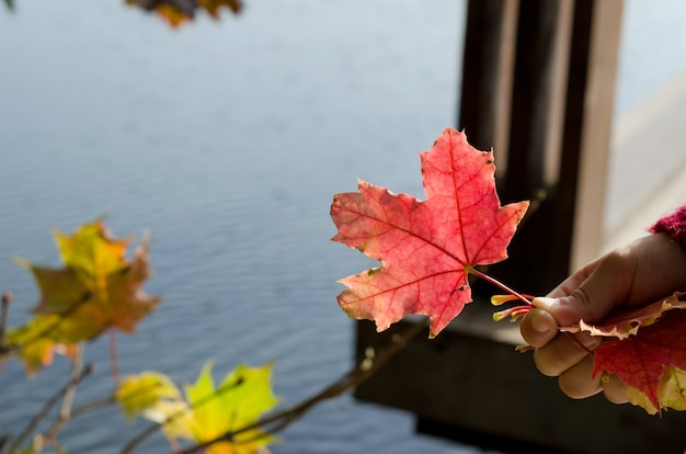 水の背景に子供の手に秋のカエデの赤い葉、スペースをコピーします。コンセプトこんにちは秋