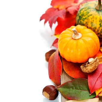 Autumn mini pumpkins and leaves on white