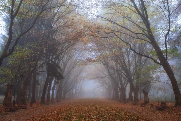 都市公園の木々と歩道の秋の霧の風景