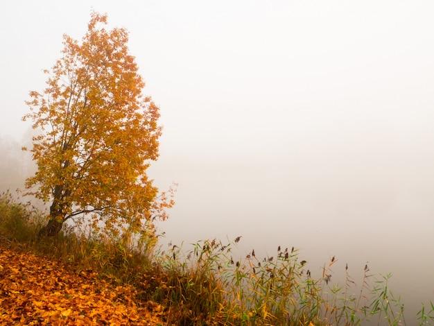 公園の秋の霧の風景。木と山腹の霧の美しい秋の風景。