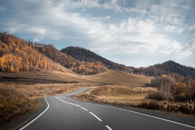 Осенний пейзаж горной дороги. алтай.
