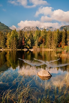 Autumn mountain and strbske pleso lake in high tatras, slovakia